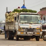 A truck, fully loaded with plantains for transport in central Uganda from the Kabalda district in the west.